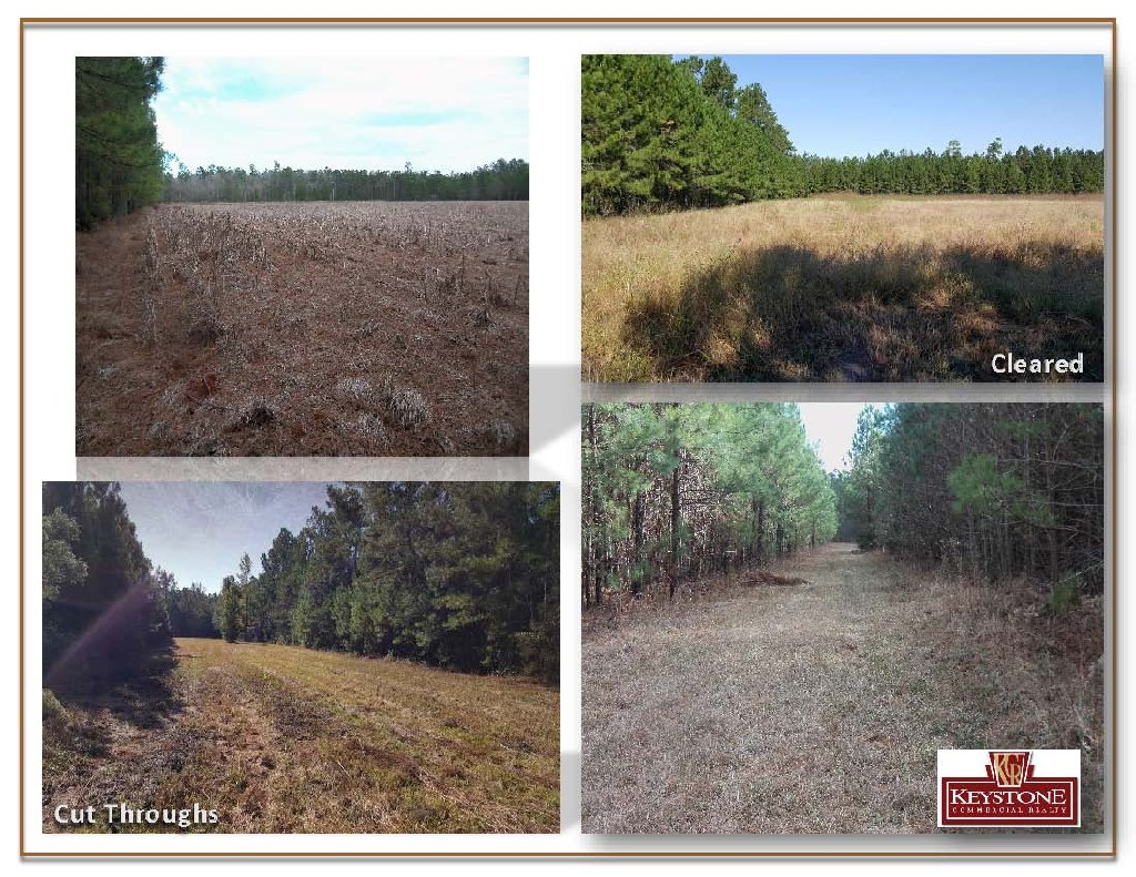 Dirty Branch Road 29.69 Acres-Land For Sale