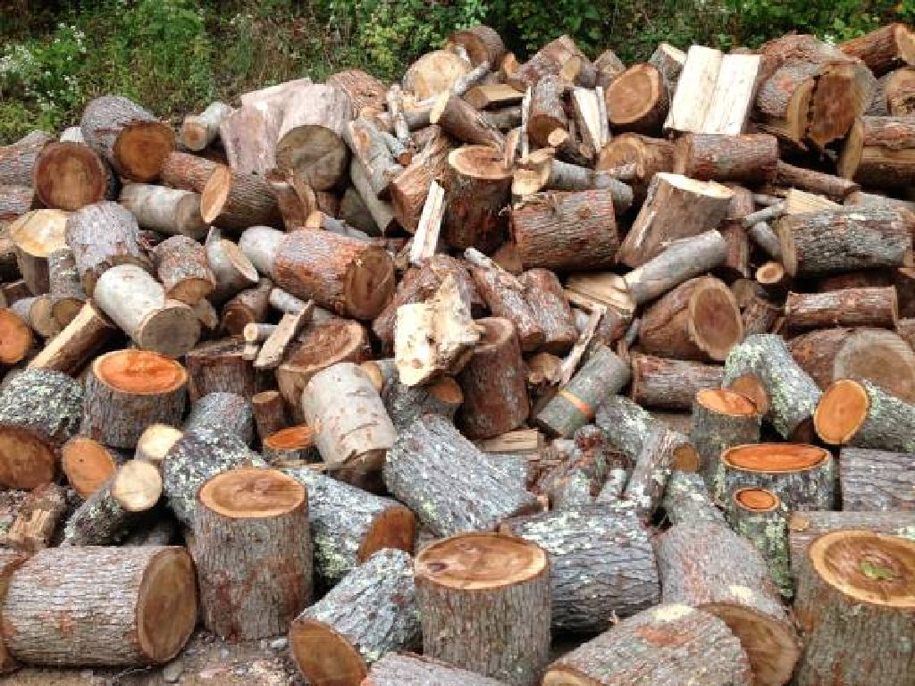 FIREWOOD - ONLY $50 FOR A PICKUP LOAD