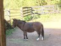 Adopt Hoya a Mule