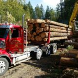 Logging Trees Timber Washington 98038