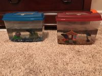 Two beta fish with tanks