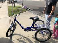 Kent Adult tricycle