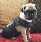 GHGVGRDR Pug Puppies