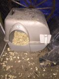 Looking for a litter box just like this one, cheap!