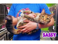 SASSY'S A SWEET, CURIOUS GAL THAT LOVES ...