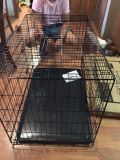 HD XL Cage w/Metal pan Brand New