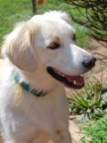 Border Collie-Beagle Mix DOG FOR ADOPTION ADN-52934 - Adorable 3 year old dog looking for new home