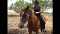 Horse for sale   3 yrs old (Corpus area)