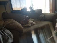 Ashley love seat and couch