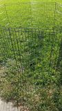 Large outdoor dog pen