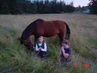 Horse Boarding - Pasture Self Care or FULL CARE AVAILABLE Horse Boarding ! WINTER is COMING..