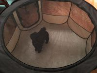 Puppy containment tent