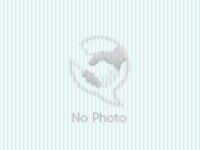 Adopt IZZY a White - with Brown or Chocolate Husky / Shepherd (Unknown Type) /