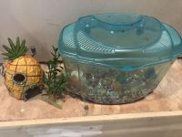 Small animal container
