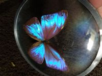 Real Butterfly In Glass Ornament