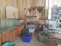 HUGE COLLECTION OF AQUARIUMS (FISH TANKS) AND SUPPLIES!