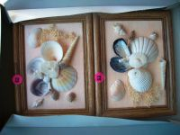 Real Shells Wood Frames with Shell Design