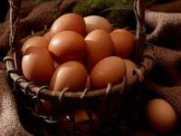 Farm Fresh Organic Chicken Eggs Quitman TX Wood County