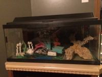 20 Gal Long Fish Tank With Hood And Accessories