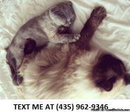 faithful/ Adorable sweet Scottish fold kittens for sale