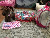 American Girll Doll. Chocolate Lab with bed, dog carrier, collar and leash, toy and blanket