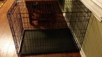 $90, Top Paw Double Door Dog Cage