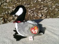 """TY Beanie Babies ~ Rare 1998 """"LOOSY THE GOOSE """" - P.E. pellets - with 2 Errors"""