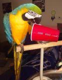 Xzawqeb Blue and Gold Macaws