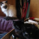Free kittens to good home