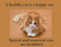 Low Cost Spay/Neuter For Cats