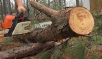 Tree Care Services- Manvel, TX- Insured- Free Estimates