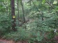 32 Beautiful acres, lots of hard wood trees. Plus 2 acre private pond.