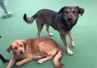URGENT PLEASE HELP US..Kerr Co Animal Control has so many sweet dogs that need to be adopted