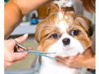 Dog Grooming Studio for Sale in Fayetteville, United States