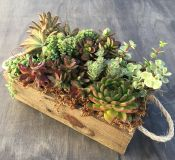 Mixed Succulents in Reclaimed Wood Planter!