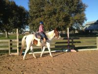 Riding lesson gift certificates