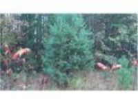 Wooded lot with access to Indian Lake