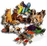 $7,800, Pet Supplies website for sale SALES 247