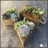 Colorful Succulents in Reclaimed Wood Planters