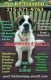 Obedience training offers all dogs Updated