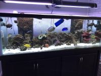 180 Gallon Complete Reef System