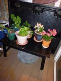 short long table that hold my plants it is not solid wood black table - furniture - by owner - sale