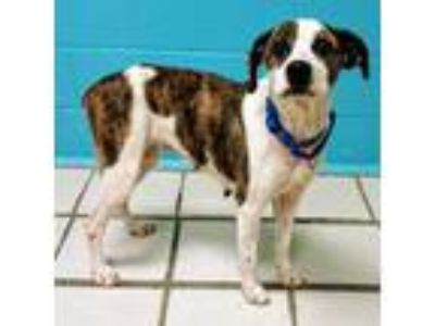 Adopt Thessaly a Mixed Breed