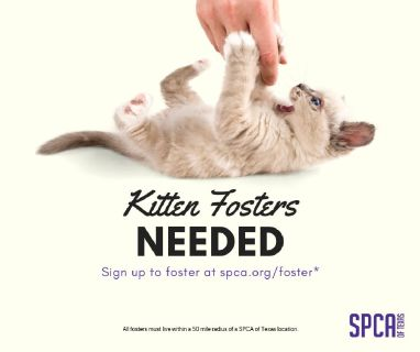 Fosters needed at the SPCA of Texas
