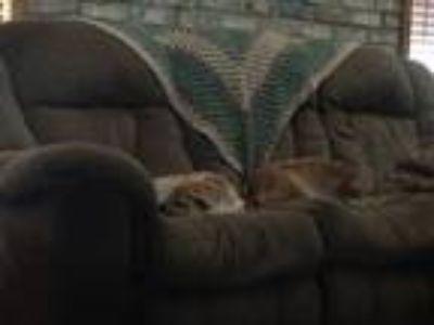 Adopt Auroa a Tan/Yellow/Fawn Shar Pei / Mixed dog in Eunice, LA (24600095)