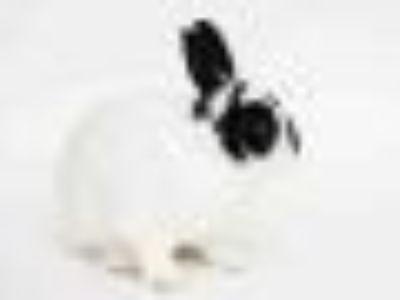 TOBY Bunny Rabbit Rabbit