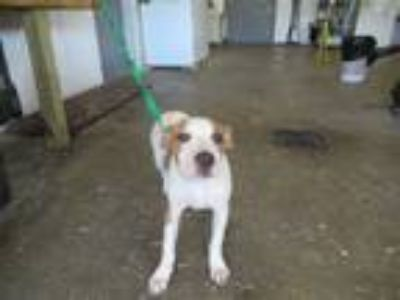 Adopt Kingston a Hound (Unknown Type) / Mixed dog in LAFAYETTE, LA (25464605)