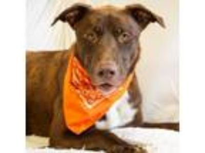 Adopt Teco a Mixed Breed