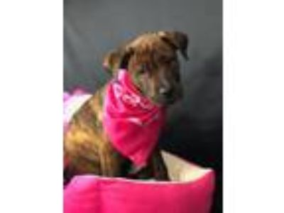Adopt Zee a Terrier, Mountain Cur