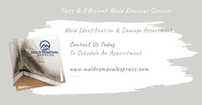 Companies that remove mold